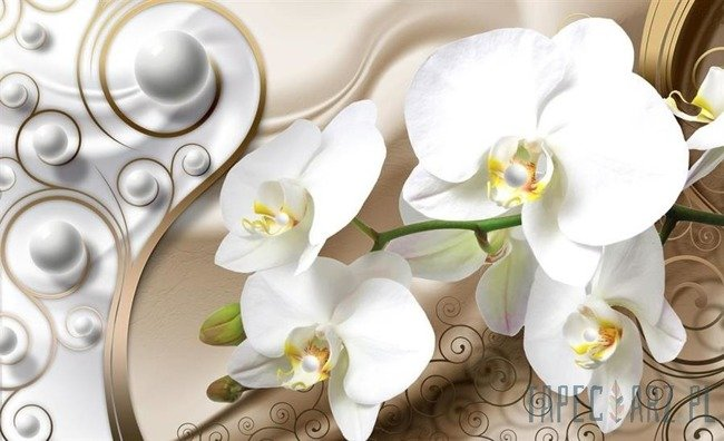 Fototapeta Białe Storczyki 2952