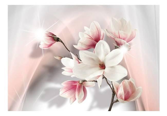 Fototapeta - Białe magnolie