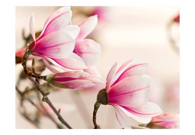 Fototapeta - Branch of magnolia tree