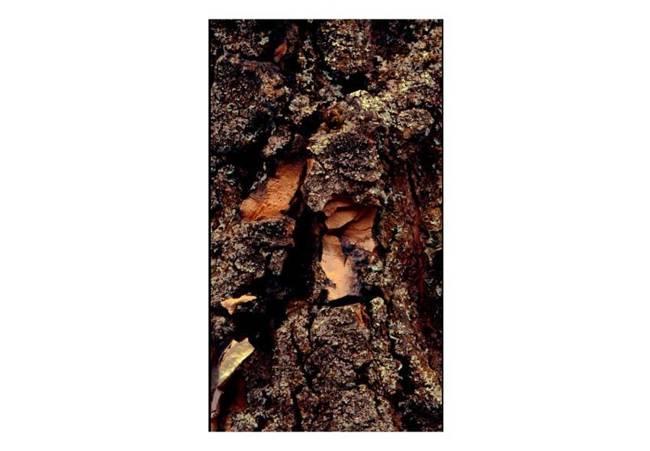 Fototapeta - Czas wyryty w drzewie