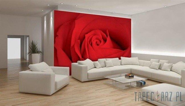 Fototapeta Czerwona róża 560