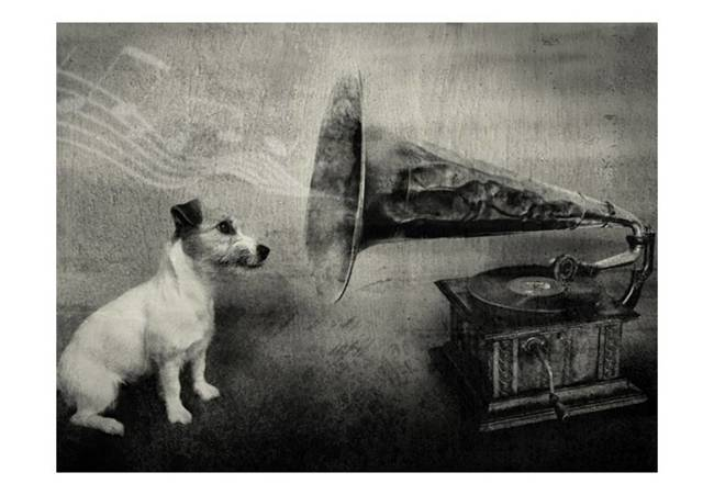 Fototapeta - Dog's melodies