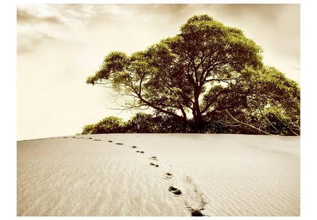 Fototapeta - Drzewo na pustyni