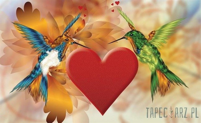 Fototapeta Dwa zakochane kolibry 555