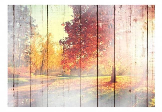 Fototapeta - Jesienne słońce