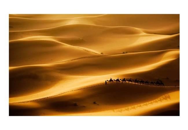 Fototapeta - Karawan wielbłądów