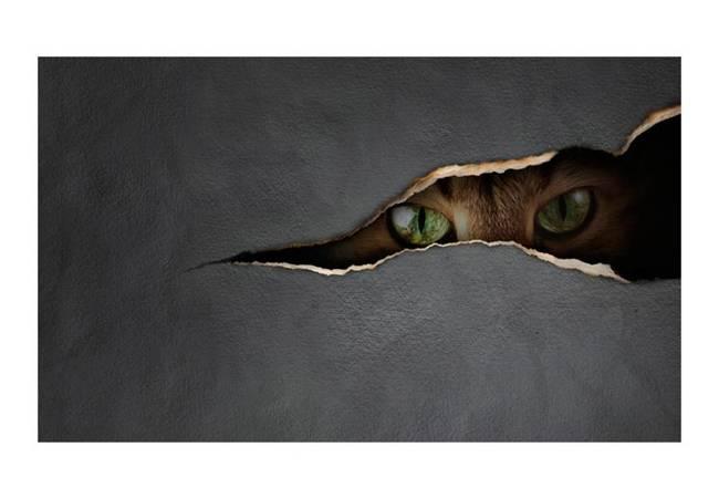 Fototapeta - Kocie spojrzenie