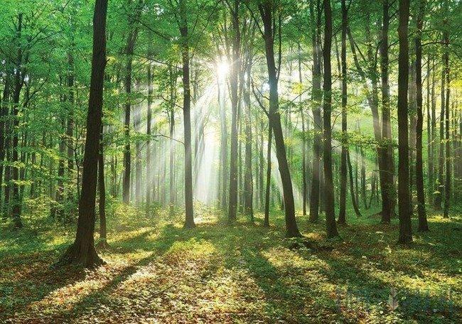 Fototapeta Las w słońcu 10329