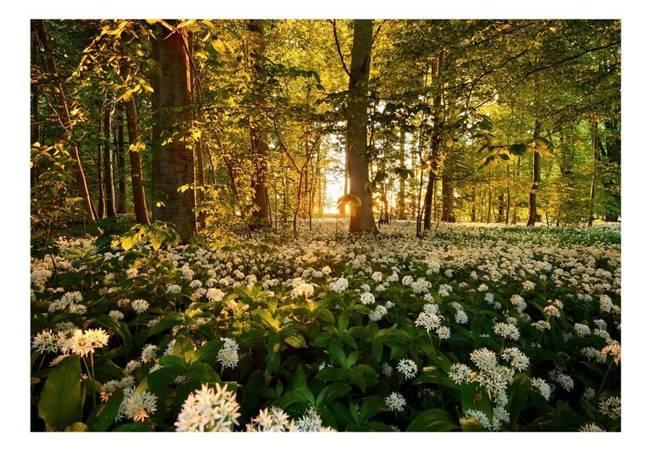 Fototapeta - Leśna flora