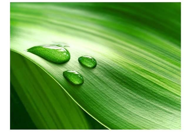 Fototapeta - Liść i trzy krople wody