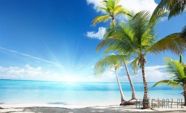 Fototapeta Palmy na plaży 735