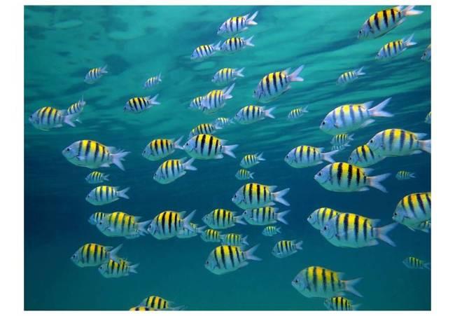 Fototapeta - Pejzaż podwodny - Karaiby