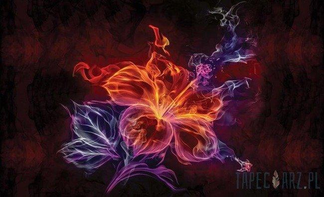 Fototapeta Płomienny kwiat 1308