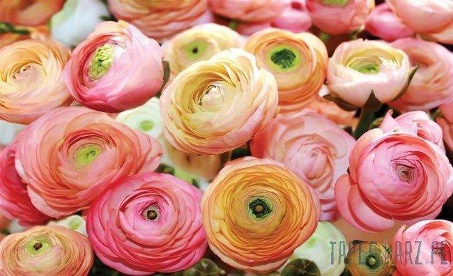 Fototapeta Pomarańczowe i różowe róże 2298