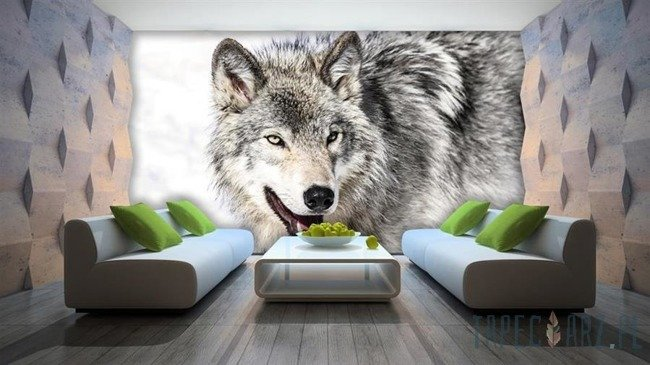 Fototapeta Śnieżny wilk 2939