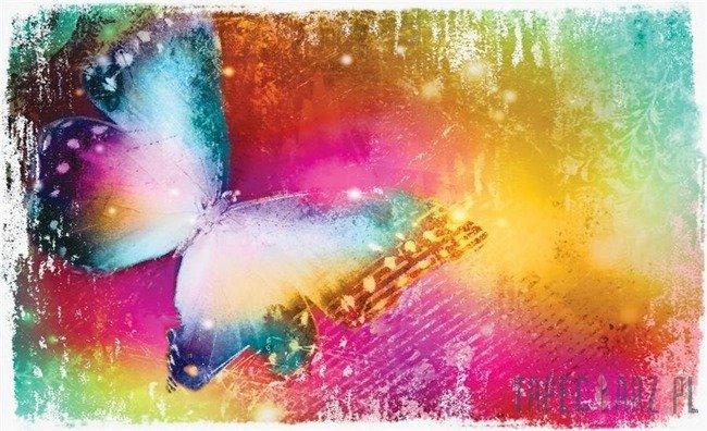 Fototapeta Tęczowy motyl 575