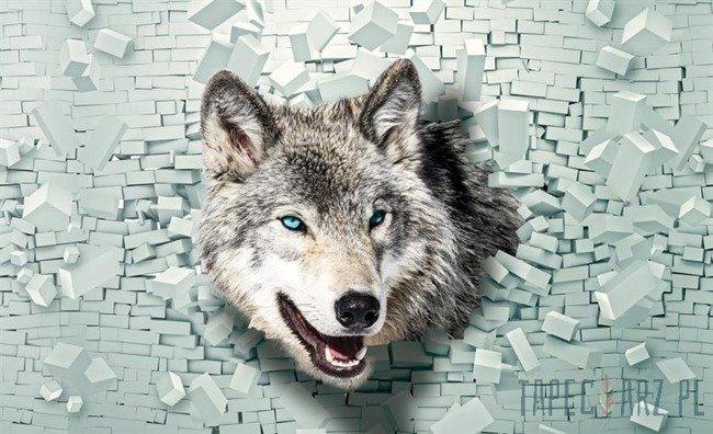 Fototapeta Wilk wychodzący ze ściany 3D 2941