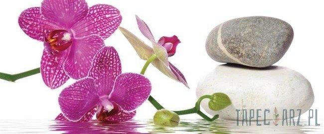 Fototapeta na flizelinie Kamienie spa z orchideą 652VEP