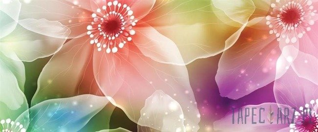 Fototapeta na flizelinie Kolorowe żonkile 421VEP