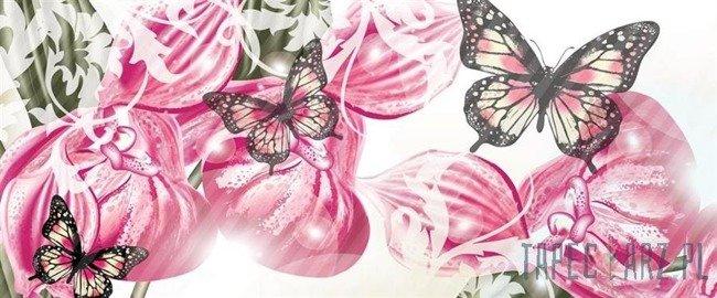Fototapeta na flizelinie Motyle na różowym tle 556VEP
