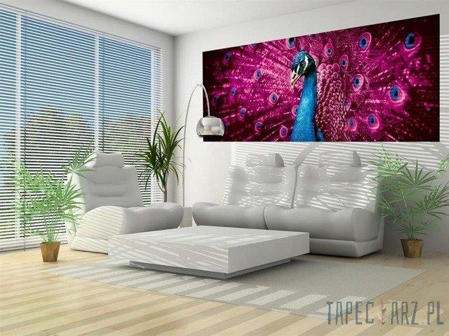 Fototapeta na flizelinie Paw z różowymi piórami 632VEP