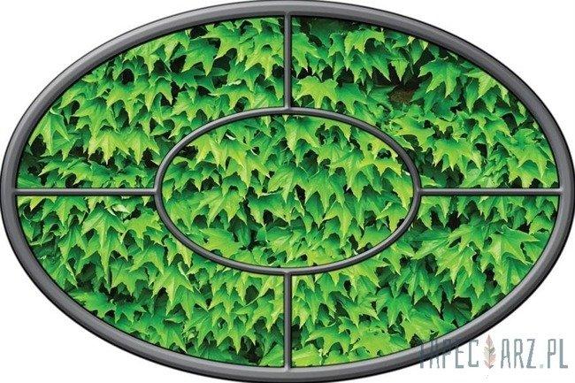 Fototapeta na flizelinie Zielony bluszcz - okno 925