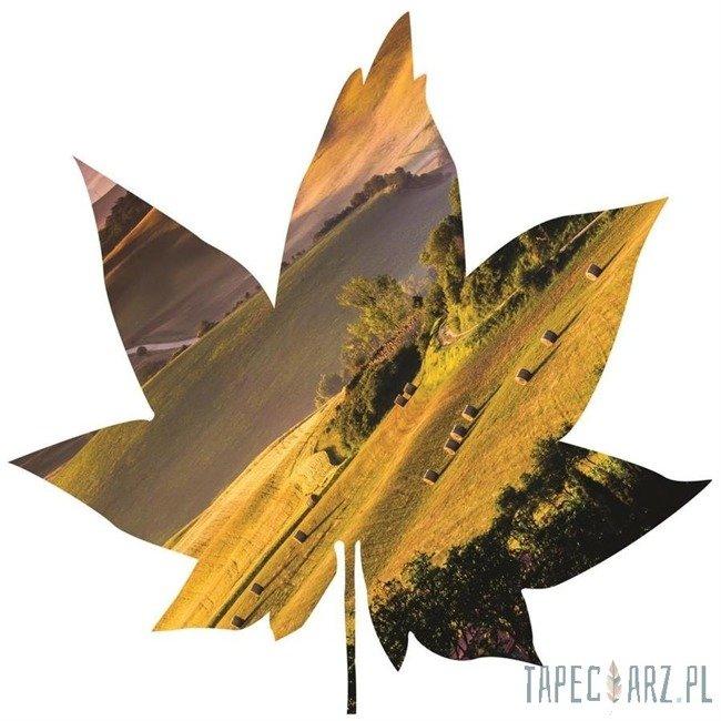 Fototapeta w kształcie liścia - Wzgórza Toskanii 905