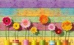 Fototapeta Kwiaty na tle kolorowych desek 3707