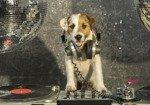 Fototapeta Pies ze słuchawkami DJ Disco 10383