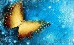 Fototapeta Złoty motyl na niebieskim tle 573